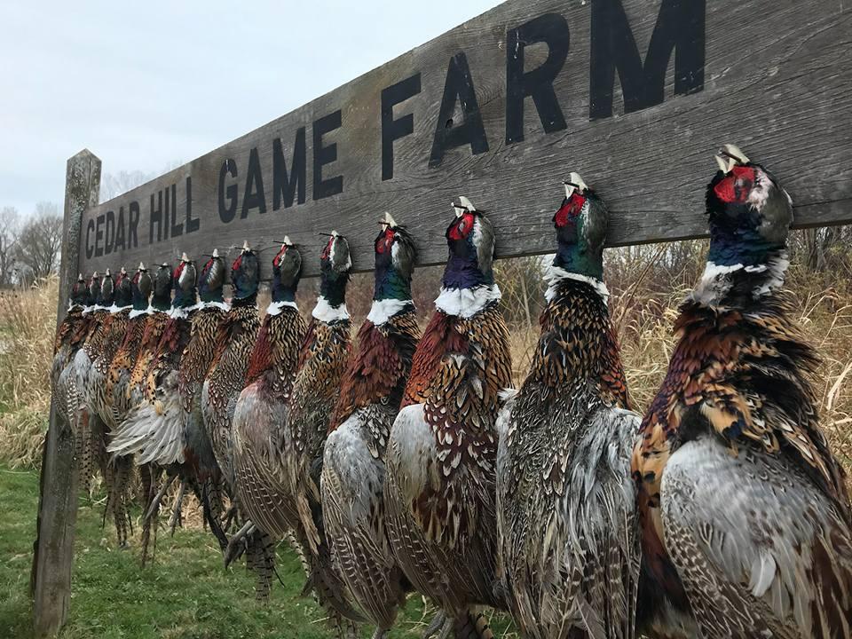 Cedar Hill Game Farm - Game Farm and Guide Service Listing in
